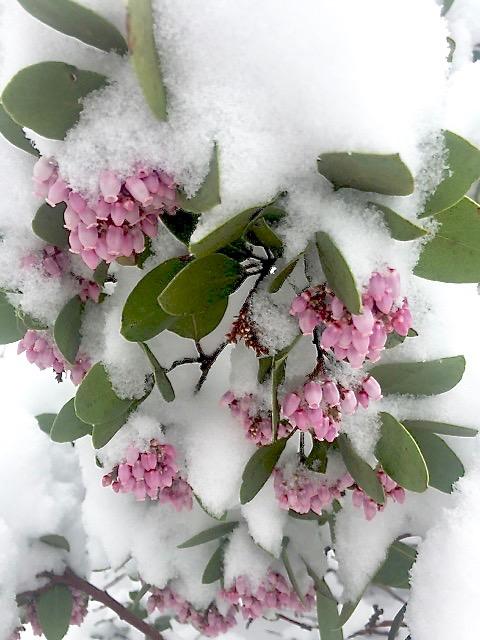 12 - flowersinsnow